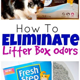 How To Eliminate Litter Box Odors