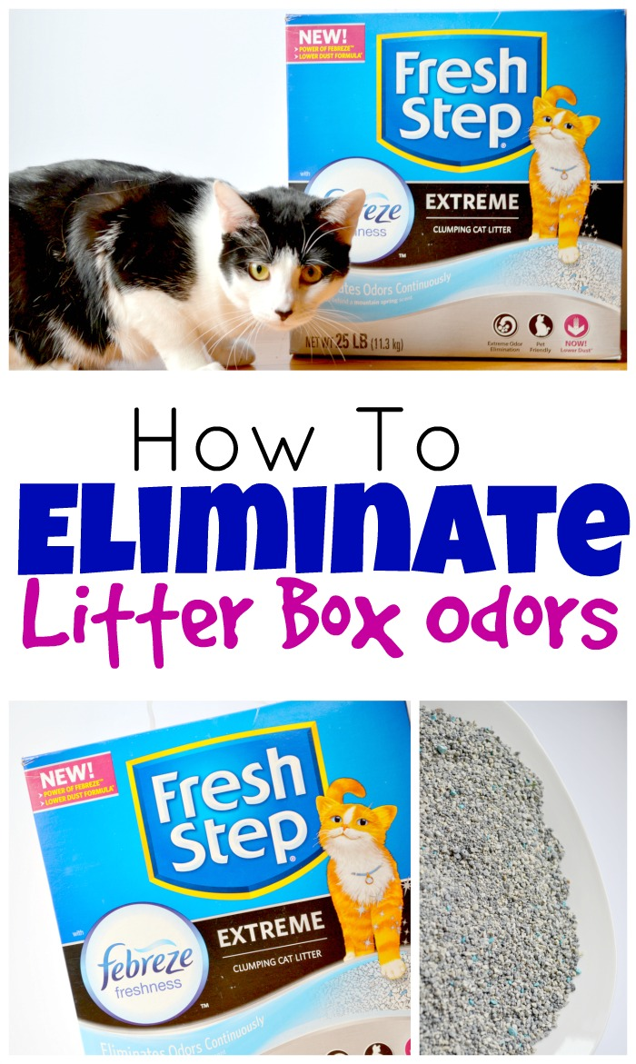 How to control litter box odor