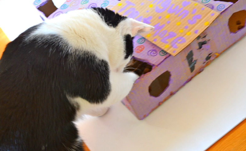 DIY Interactive Treat Maze For Cats