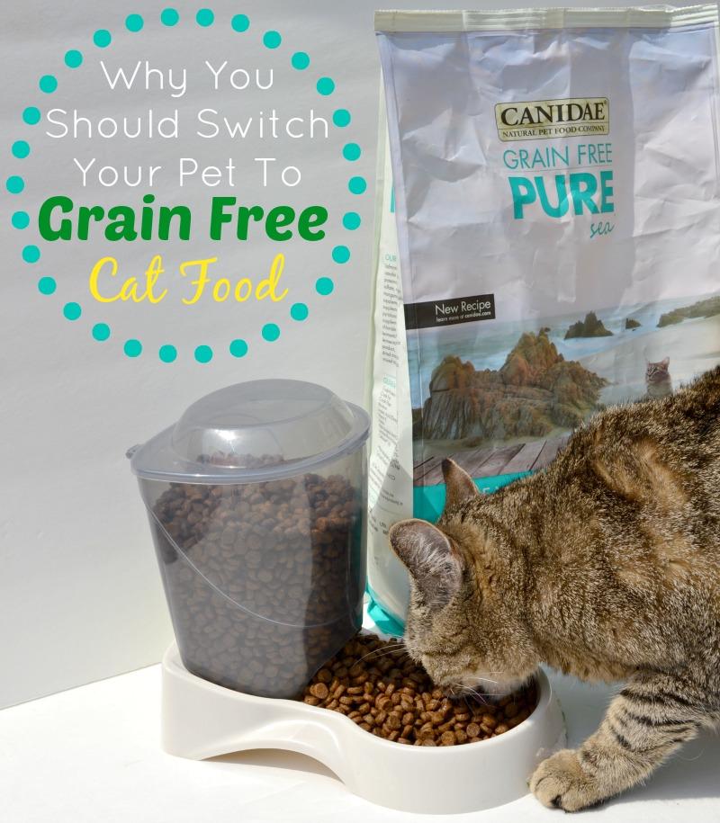 Should I Switch To Senior Cat Food
