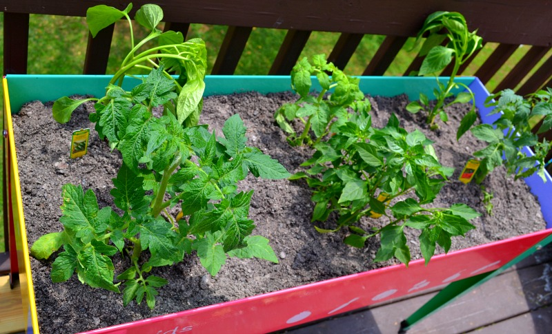 How To Start Your Own Back Porch Veggie Garden