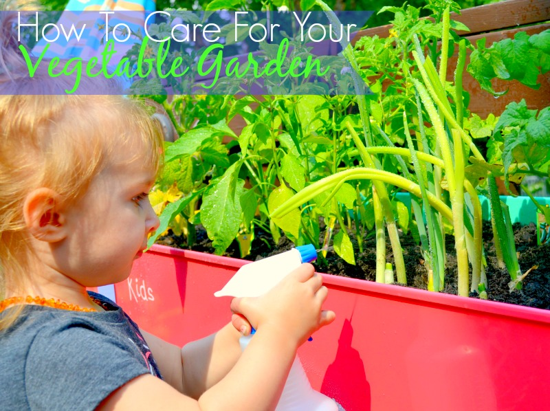 How To Care For Your Vegetable Garden