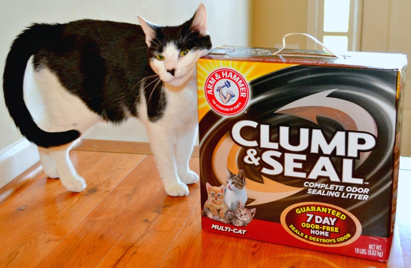 Cat Litter Box Problems & How To Stop Them