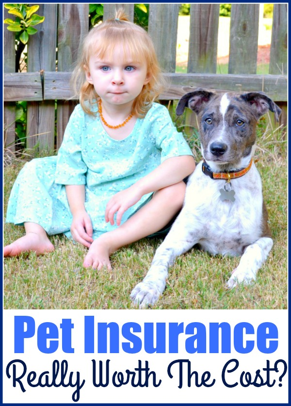 Is Pet Insurance Really Worth The Cost?