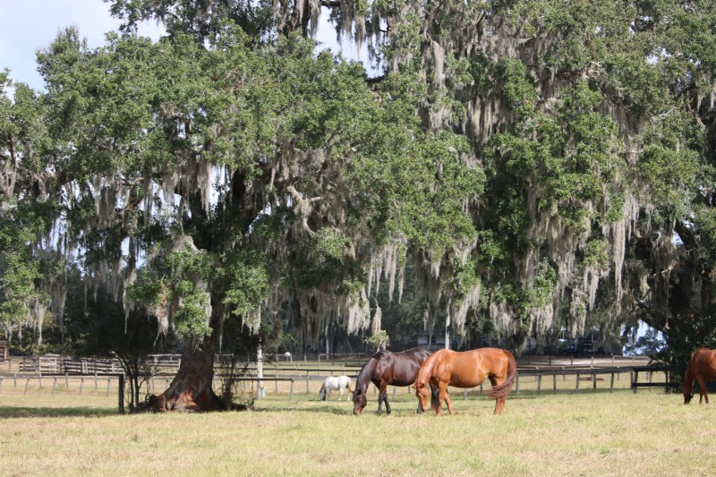 5 Reasons To Visit Ocala/Marion County Florida With The Family