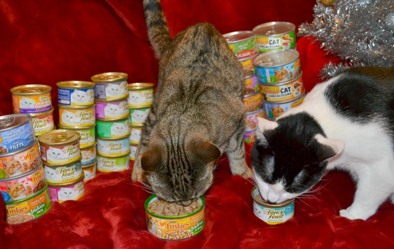 Stock Up and Save On Cat Food For The Holidays