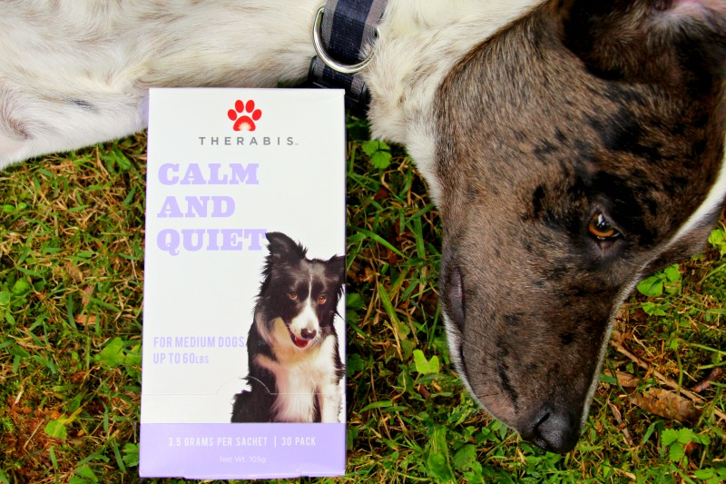 How to Keep Your Dog Calm During Fireworks