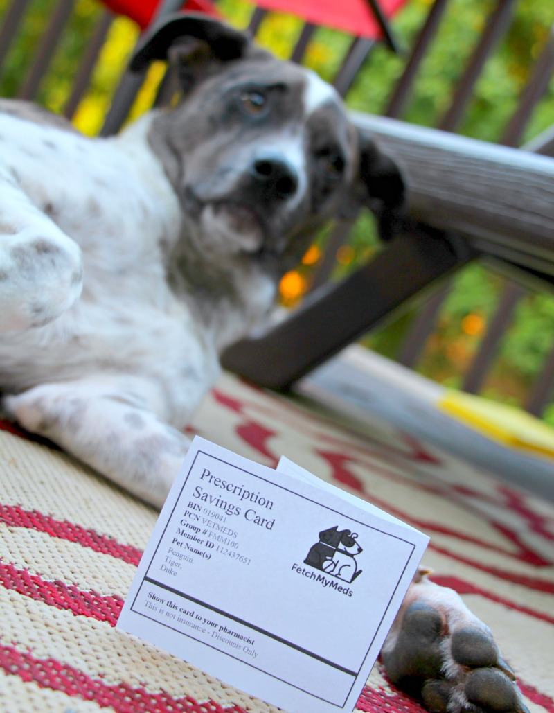 The Easiest Way to Save Money on Pet Meds