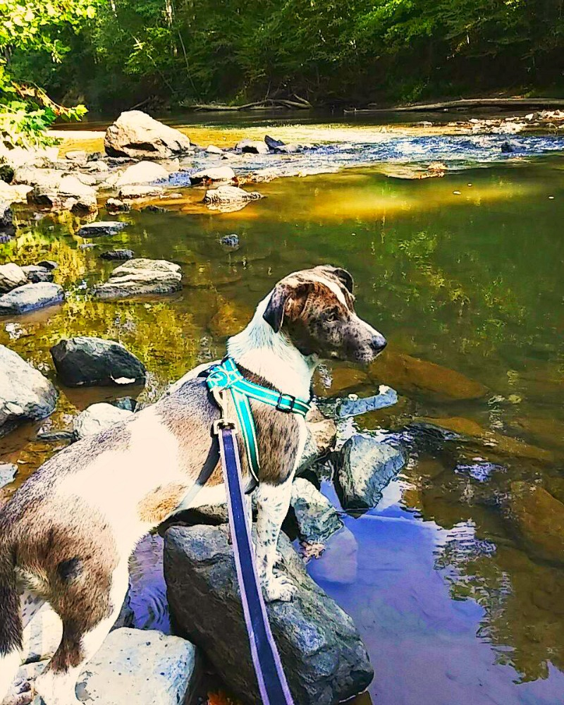 Tips For Bringing Your Dog Hiking