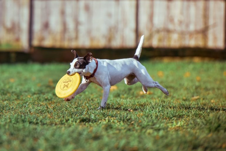 4 Things to remember before buying an in-ground dog fence