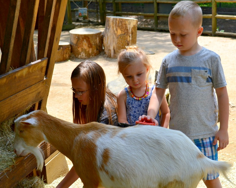 Our Summer Trip to Atlanta's First Zoo