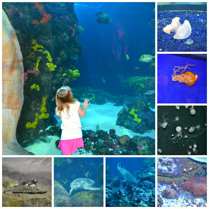 Our Trip to the Tennessee Aquarium