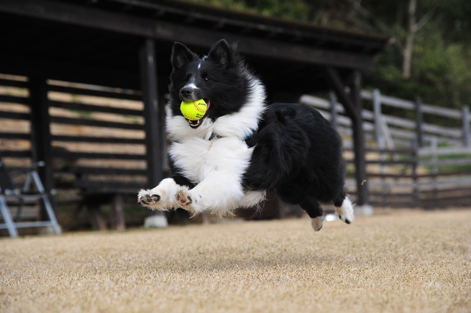 5 Ways to Exercise Your Active Breed Dog