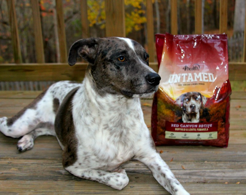 Untamed Is For Pets Who Are Wild At Heart
