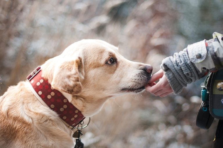 4 Great Ways to Reward Your Furry Friend When You're on a Budget