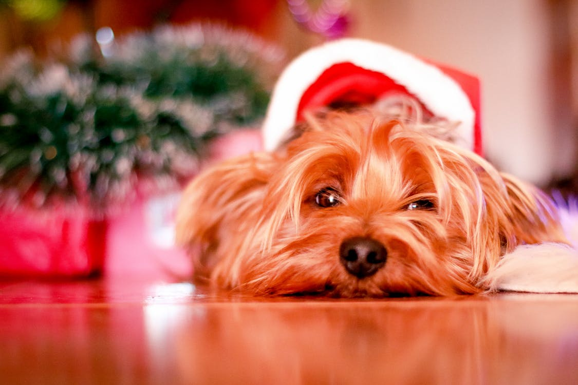7 Christmas Gift Ideas for Dog Lovers