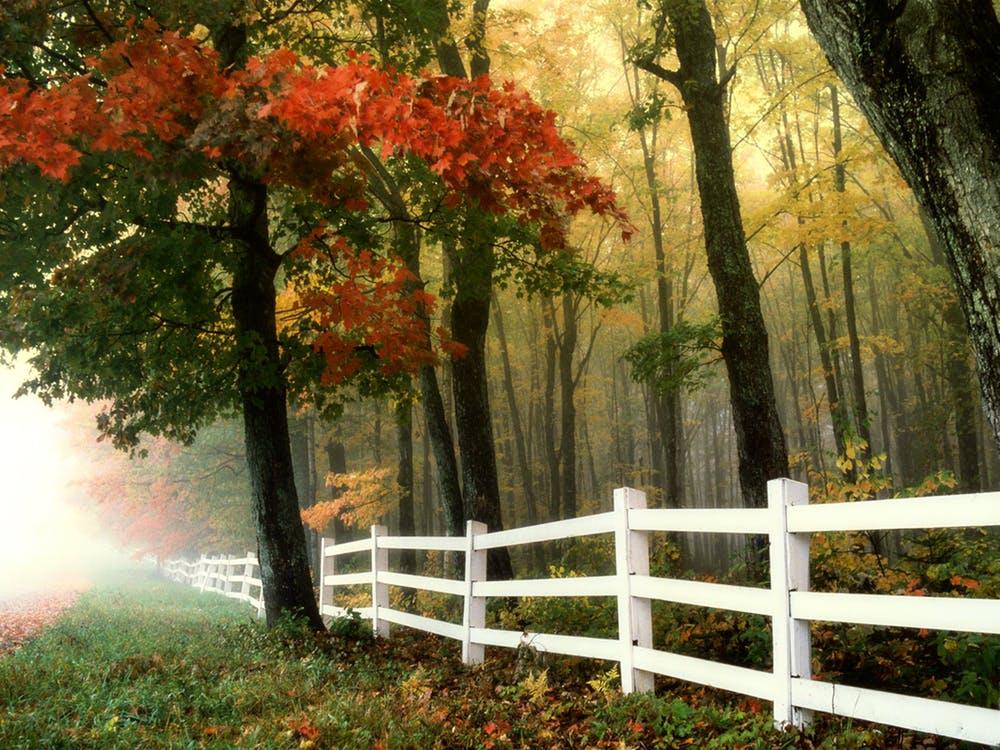 Do Fences Make Good Homes & Neighborhoods?