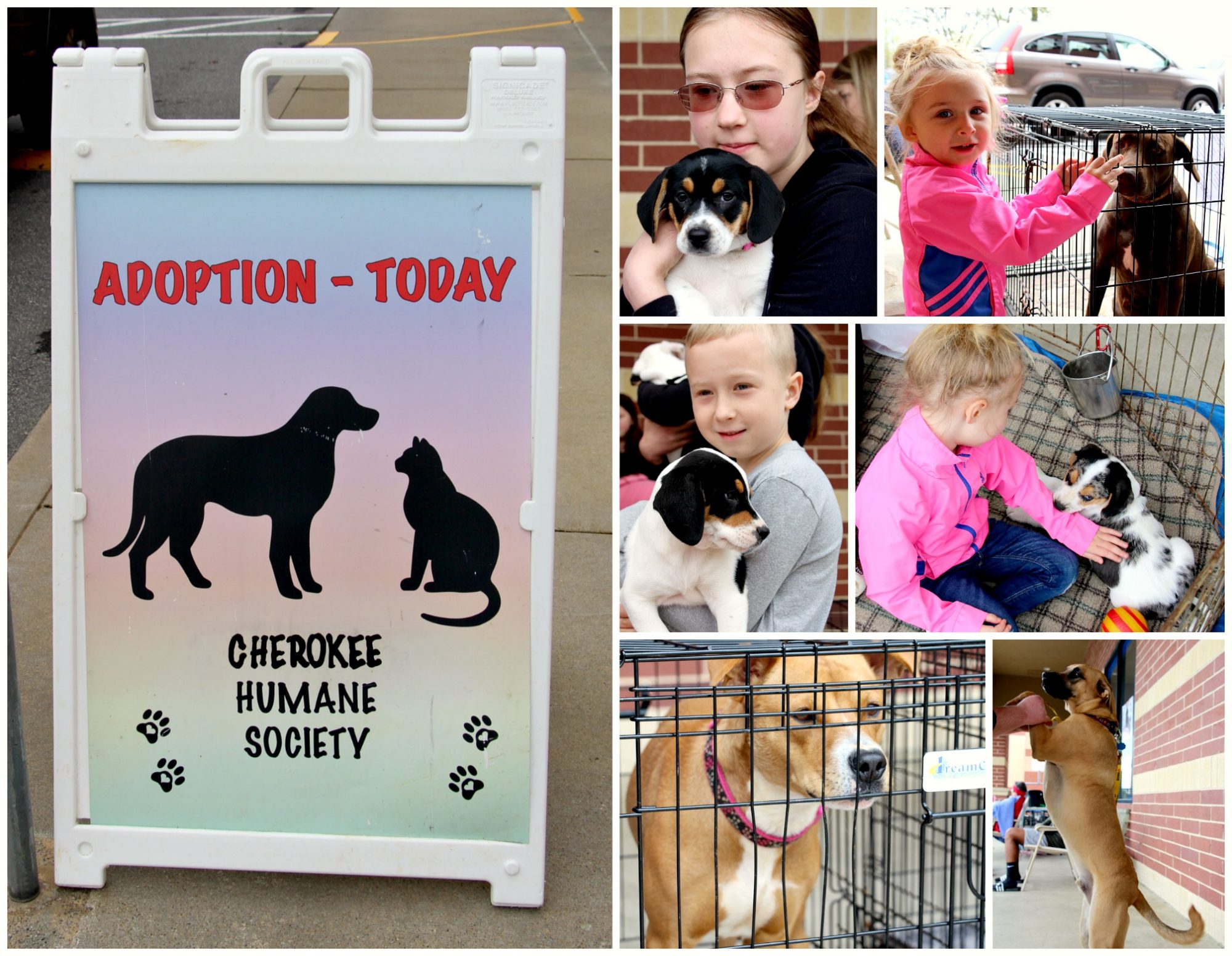How To Support Your Local Pet Shelters