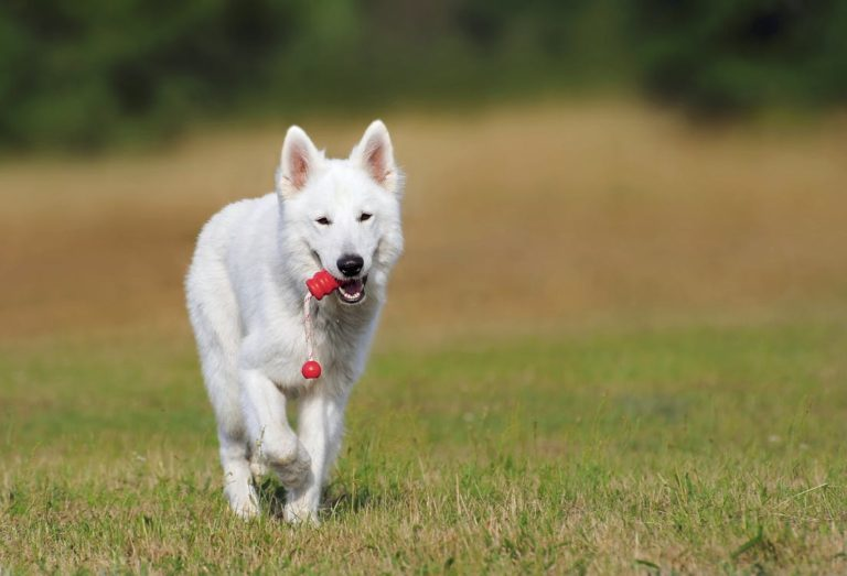 What Are The Best Pet Toys?