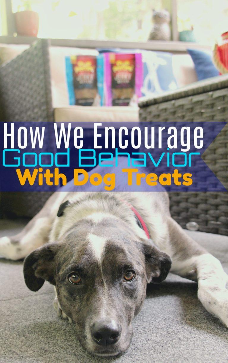 How We Encourage Good Behavior With Dog Treats