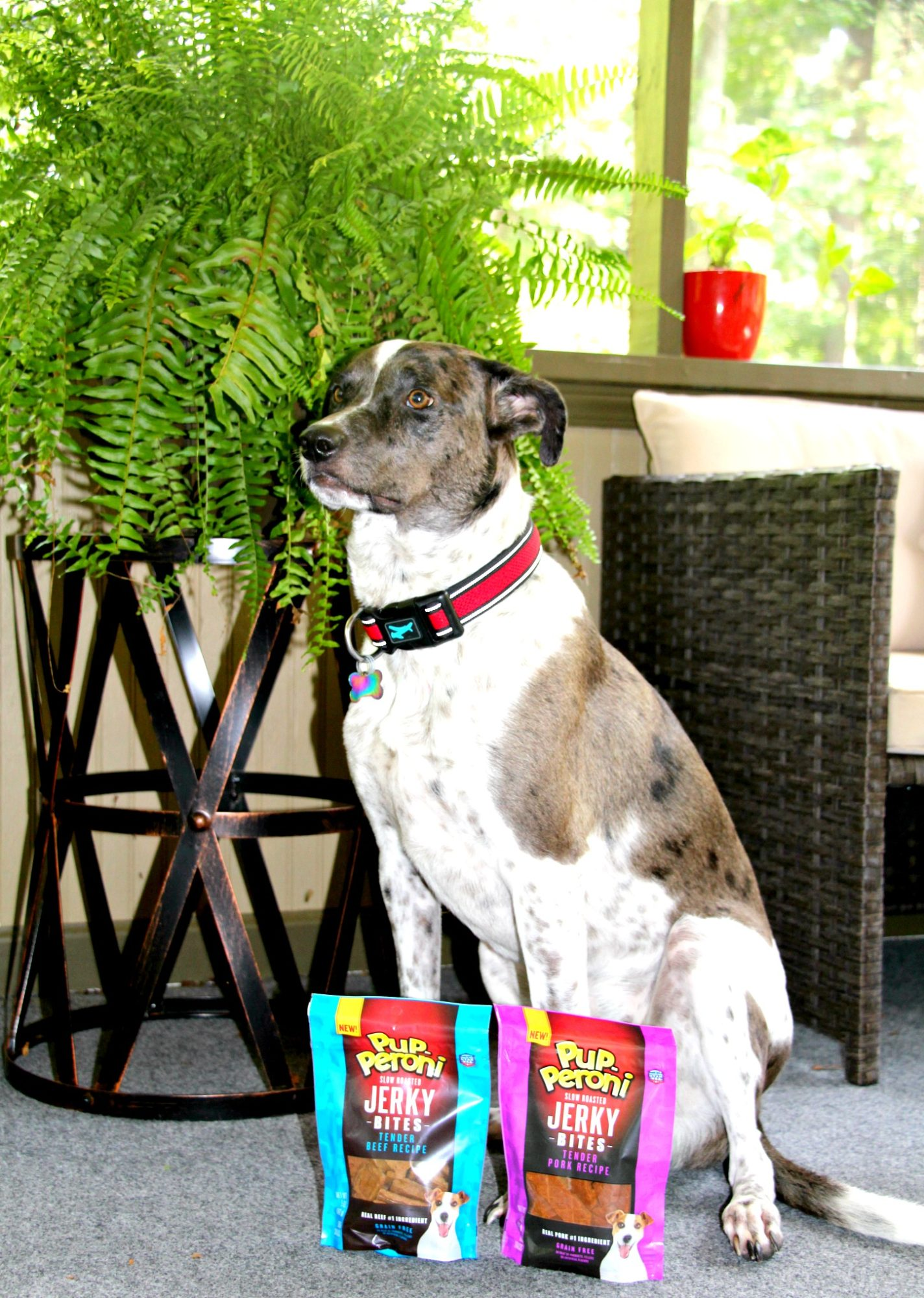 How We Encourage Good Behavior With Dog Treats