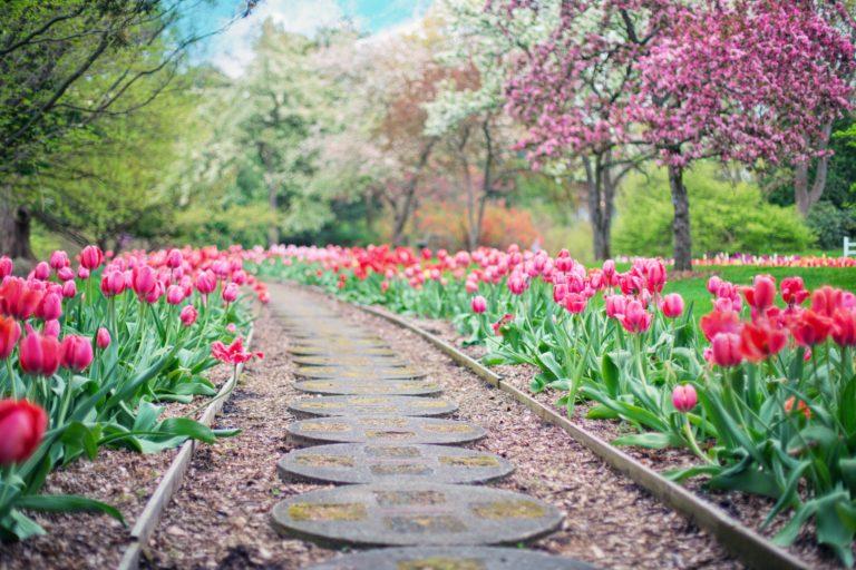 Top 5 Best Gardening Blogs to Follow in 2019