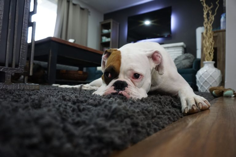 7 Carpet Cleaning Tips to Preserve Your Carpet's Condition