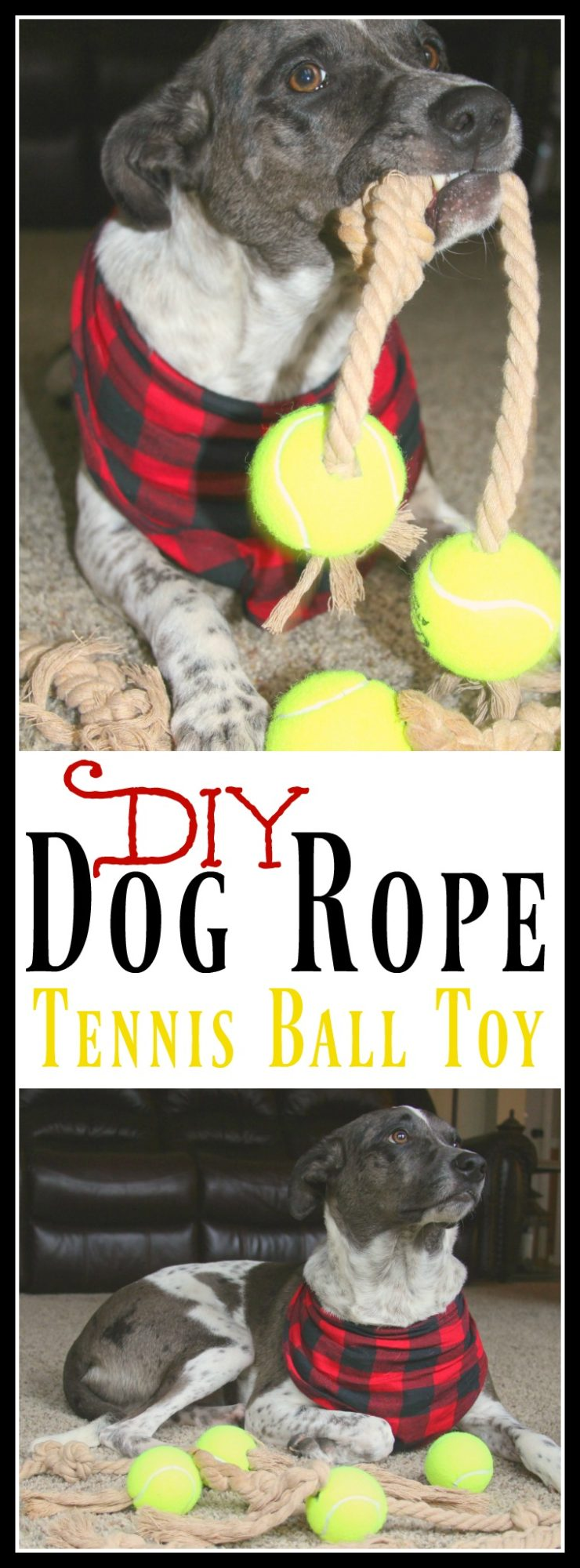 DIY Dog Rope Tennis Ball Toy