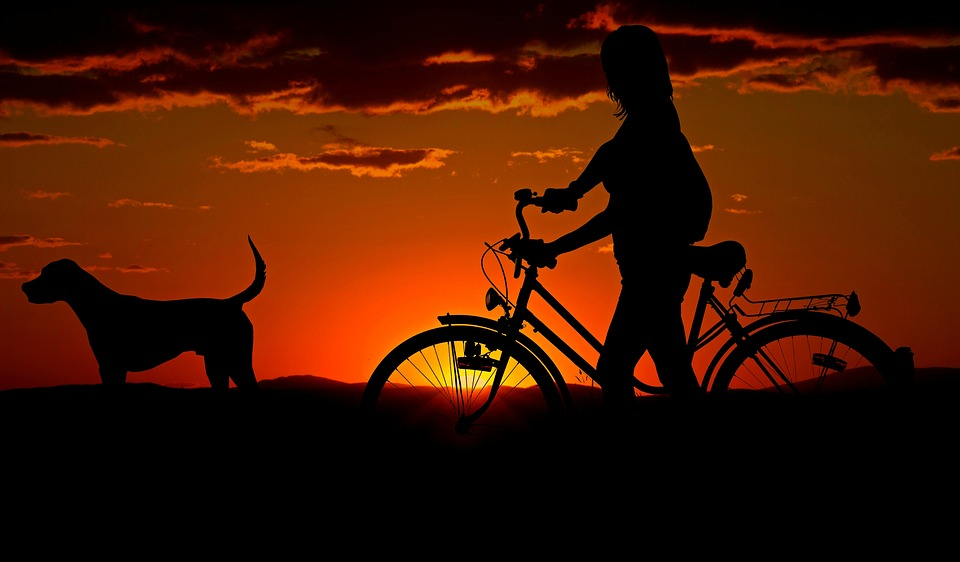 4 Tips to Biking With Your Dog