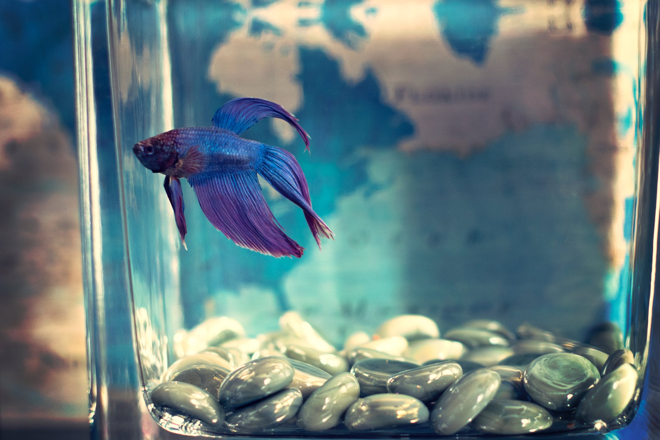 Best Small Pet Fish to Buy In 2019