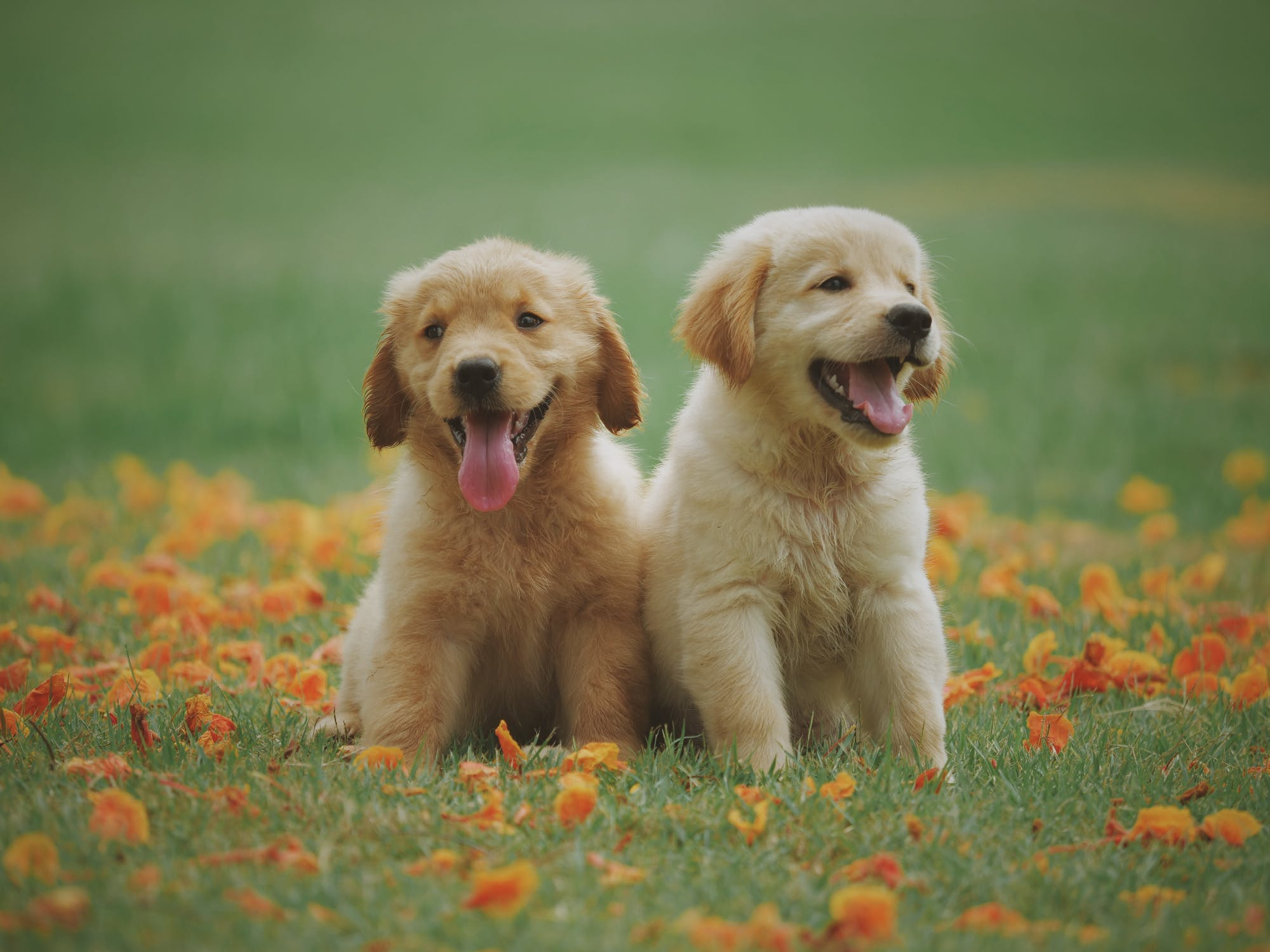 4 Tips For Taking Care Of A New Puppy