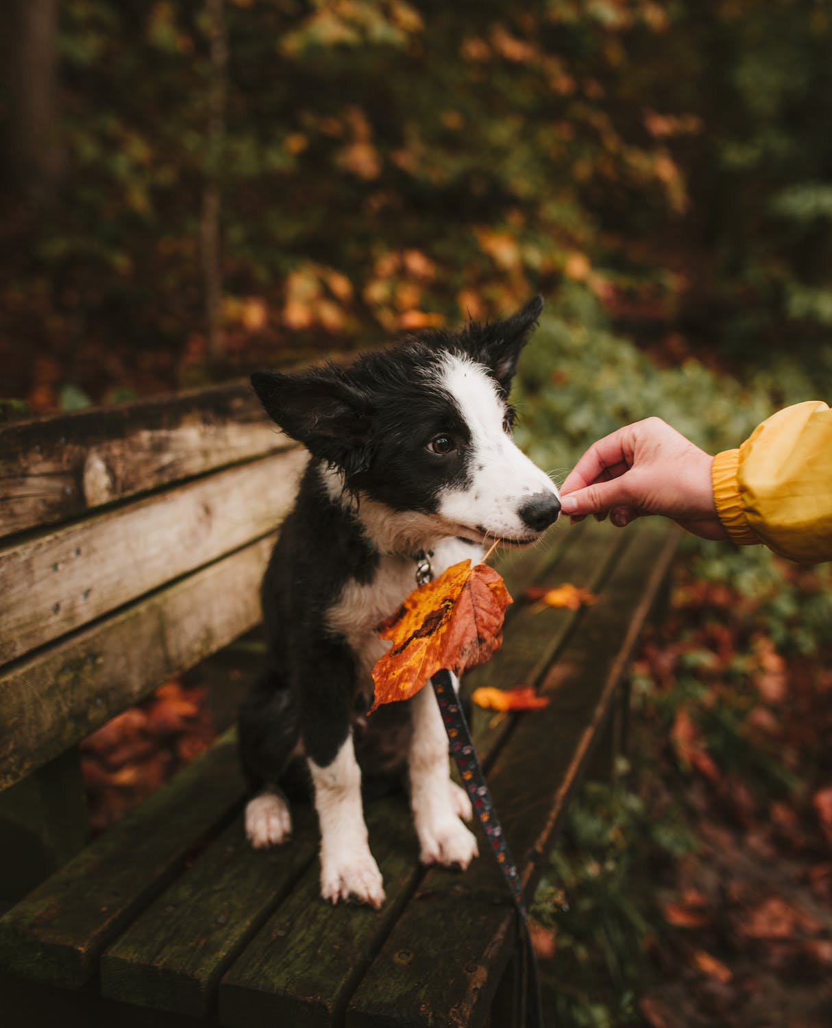 4 Tips For A Peaceful, Loving Dog