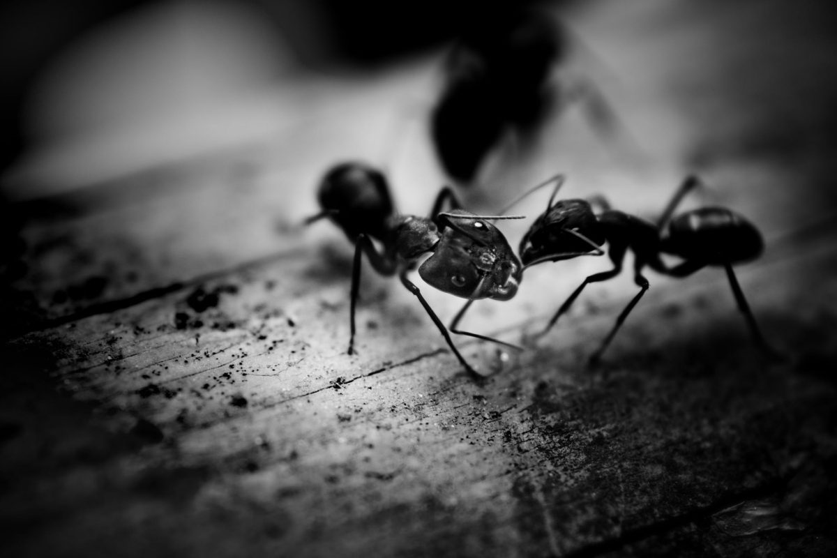 6 Ways to Remove Little Black Ants From Your home