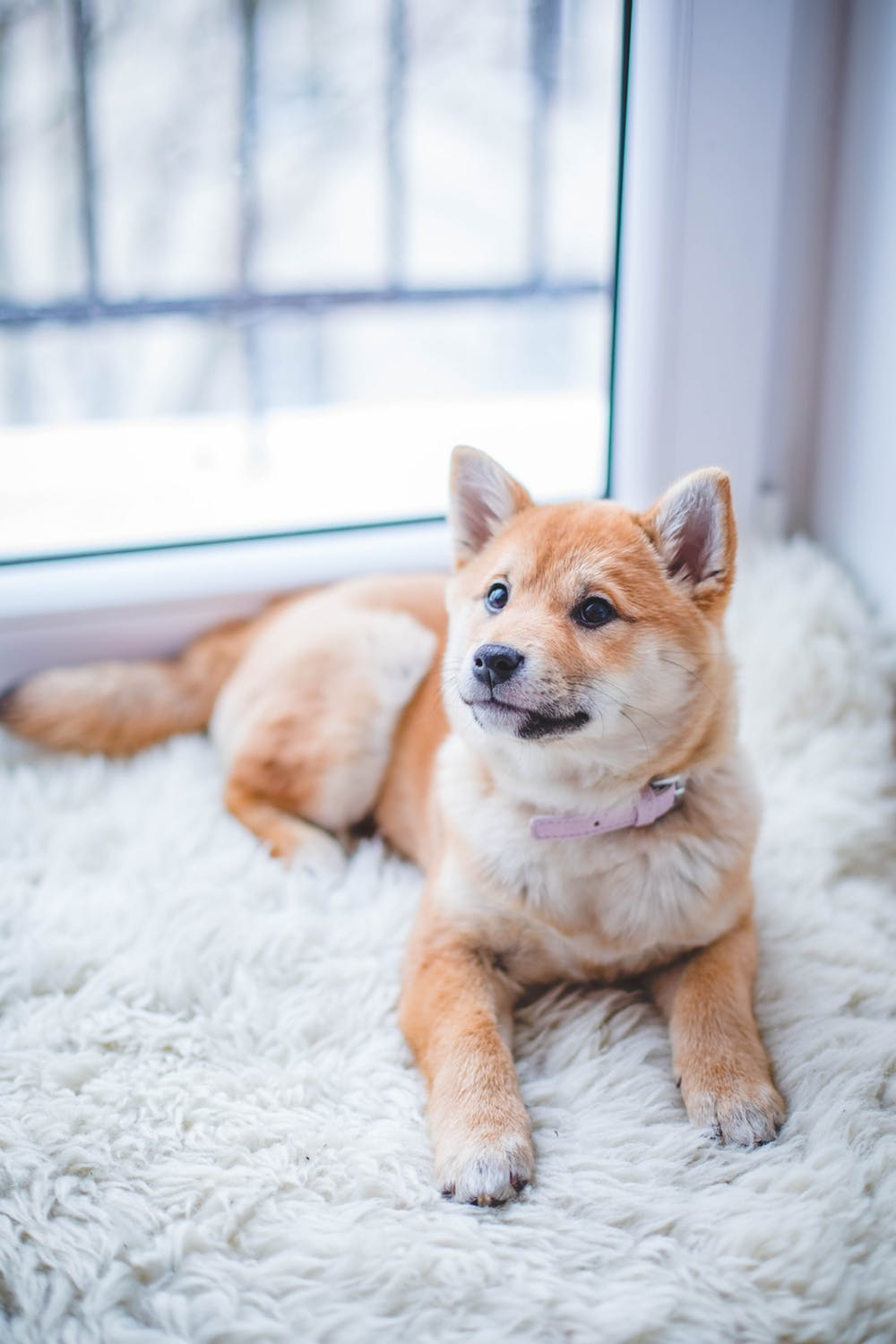 Does Pet Insurance Actually Save You Money?