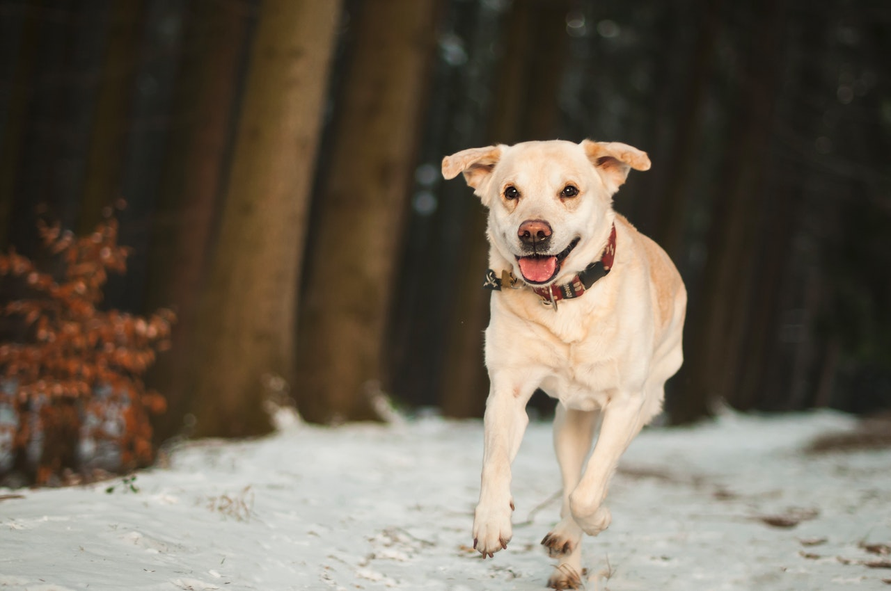5 Safe Exercises for Dogs With Hip Dysplasia