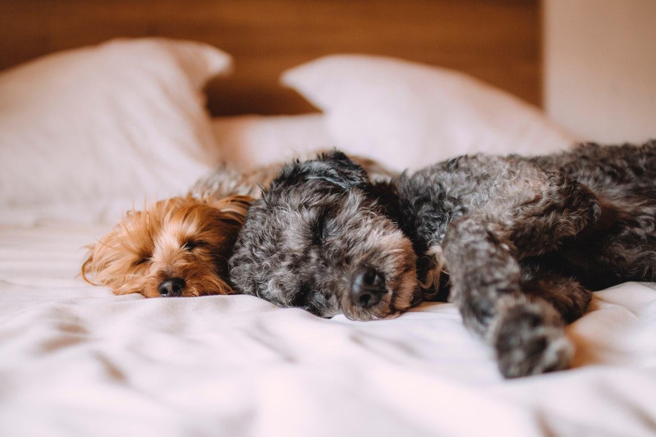 5 Pet Hacks For Taking Your Furry Friend To The UK
