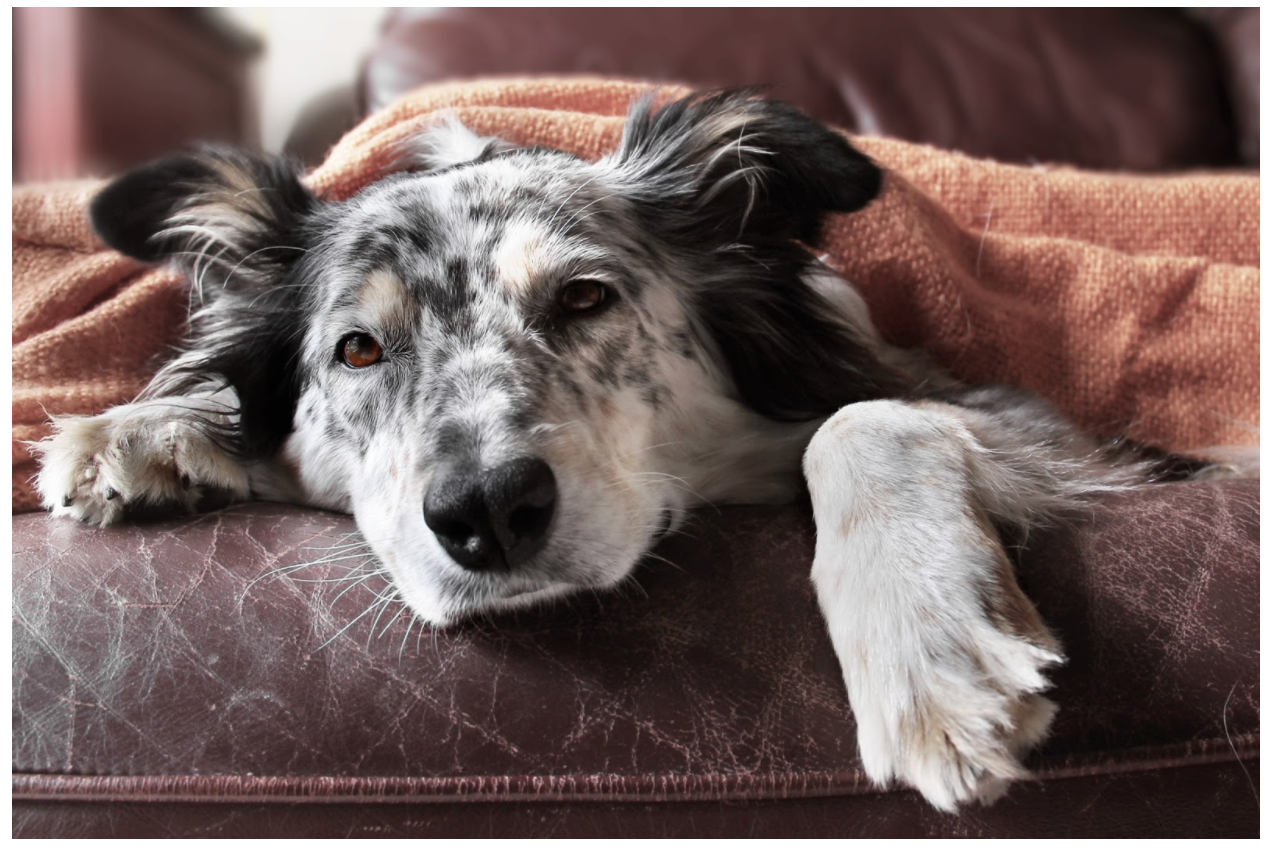 10 Common Signs of Anxiety in Dogs and How to Treat It