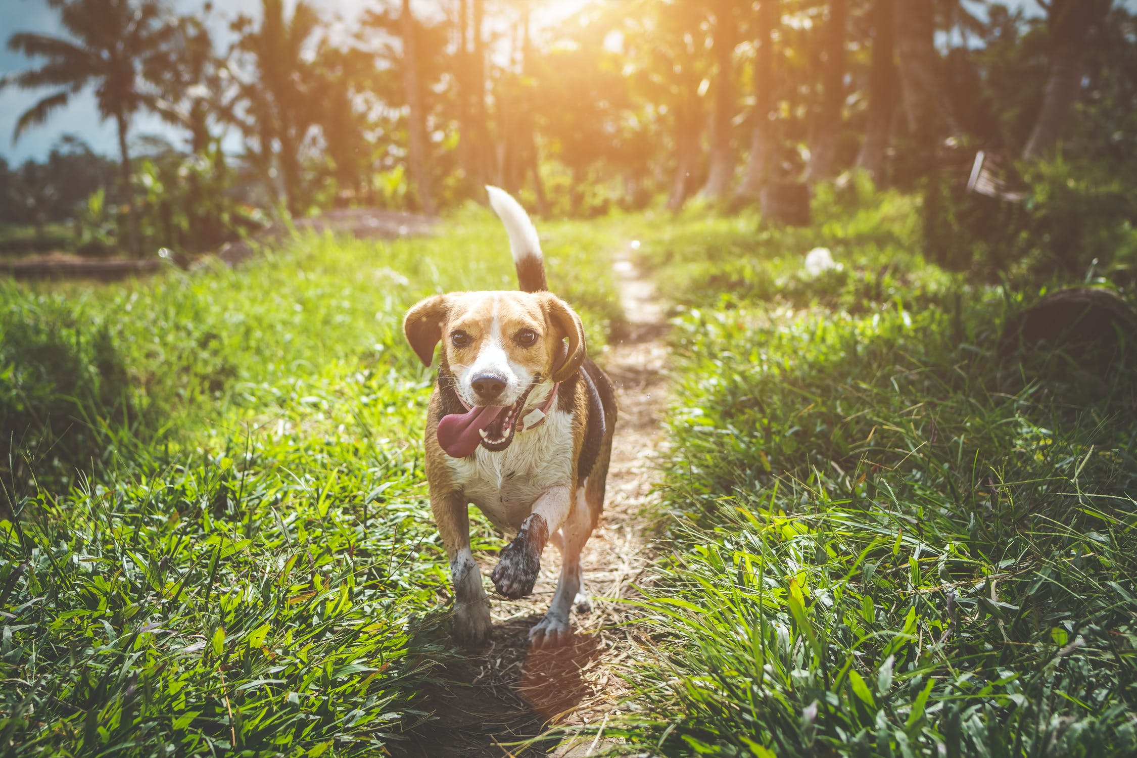 Important Steps to be Taken to Keep Your Dogs in Good Shape