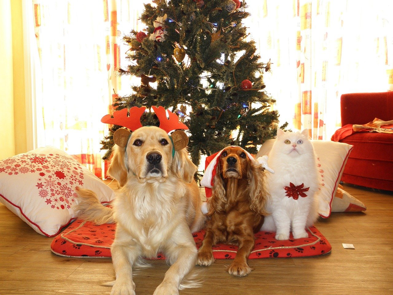 Gift Giving Guide: Should You Give a Pet as a Gift?