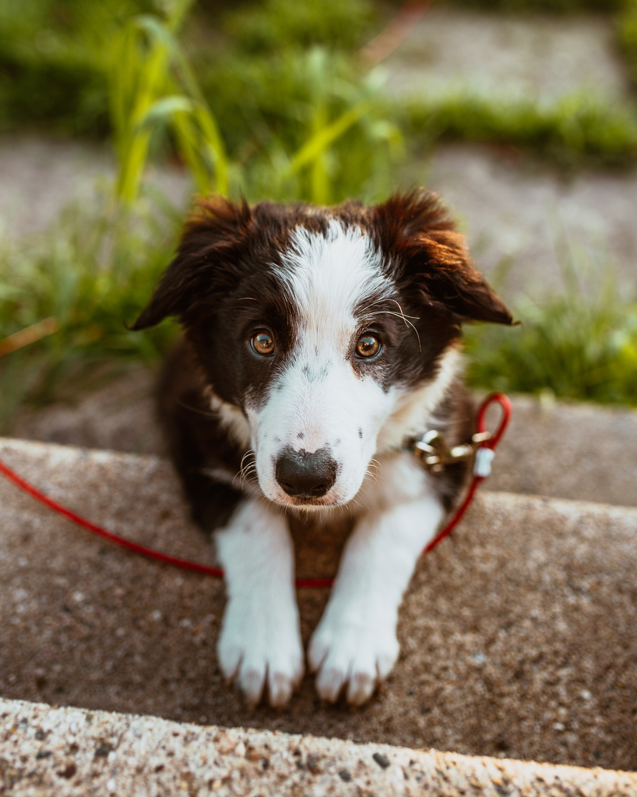 5 Tips to Provide Lifelong Care for Your Dog