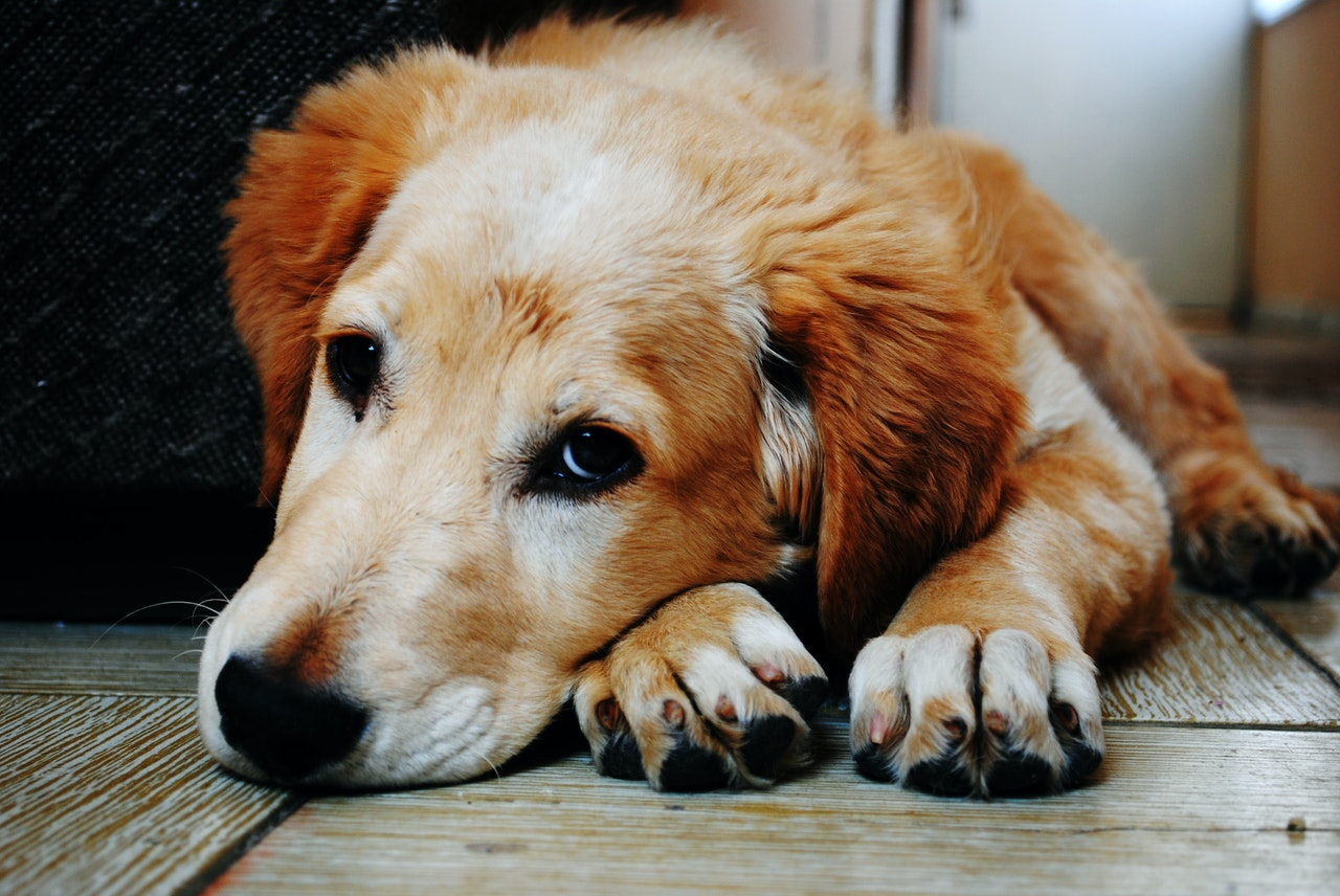 Helping Your Pet Cope With Moving Anxiety