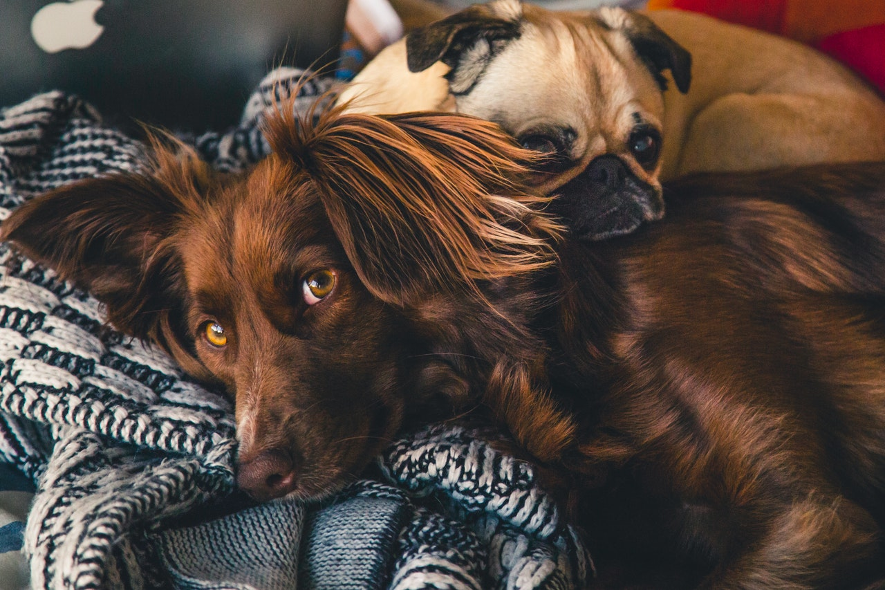 Four Tips for Designing a Comfy Home for Your Pet