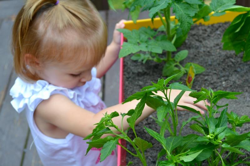 How To Start Your Own Back Porch Veggie Garden