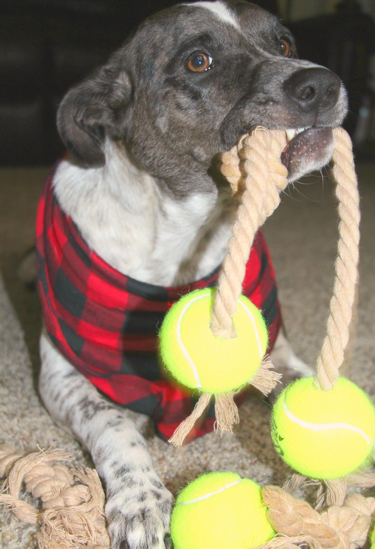 DIY Dog Rope Tennis Ball Toy