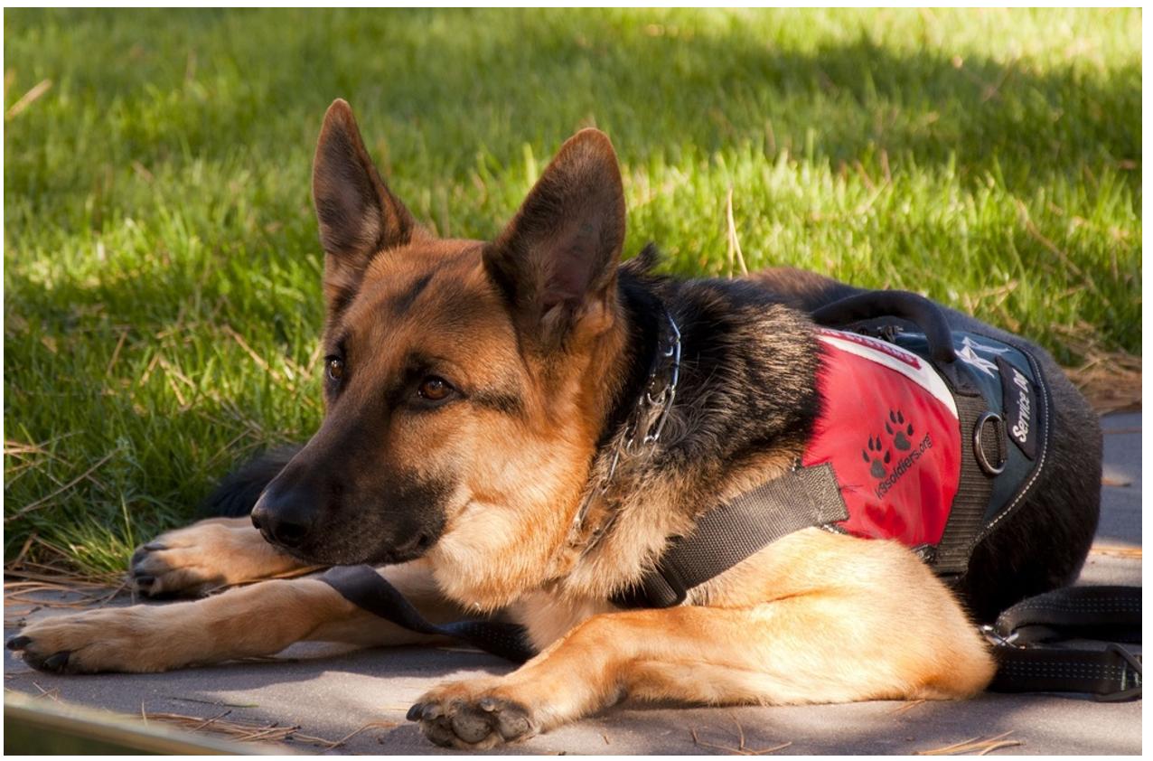 Dog Breeds: The Seven Major Groups